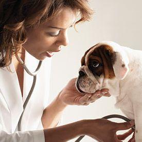 Assurance pour animaux de compagnie Trupanion