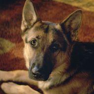 Film Title: A Dog's Purpose