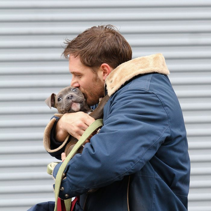 Tom Hardy spotted shooting scenes with a cute puppy for his upcoming movie 'Animal Rescue' in Brooklyn, NYC. <P> Pictured: Tom Hardy <P><B>Ref: SPL509299 110313 </B><BR/> Picture by: Splash News<BR/> </P><P> <B>Splash News and Pictures</B><BR/> Los Angeles:310-821-2666<BR/> New York:212-619-2666<BR/> London:870-934-2666<BR/> photodesk@splashnews.com<BR/> </P>