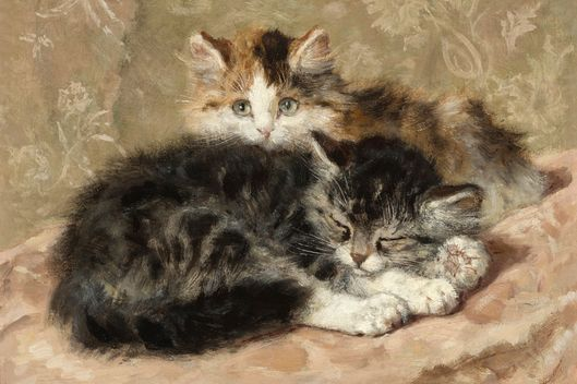 These cat portraits are 19th century memes vulture for Cat paintings on canvas