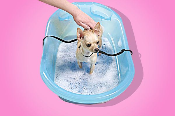 Best pet bathtub