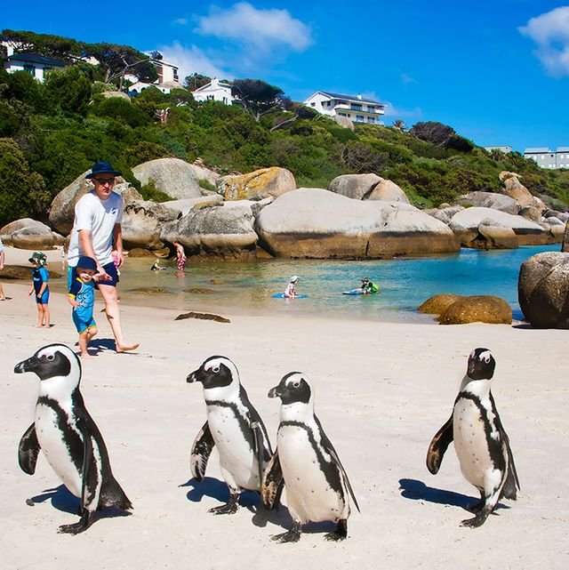 Penguin Beaches, Storybook Villages, and Other Ways to Escape Cape Town