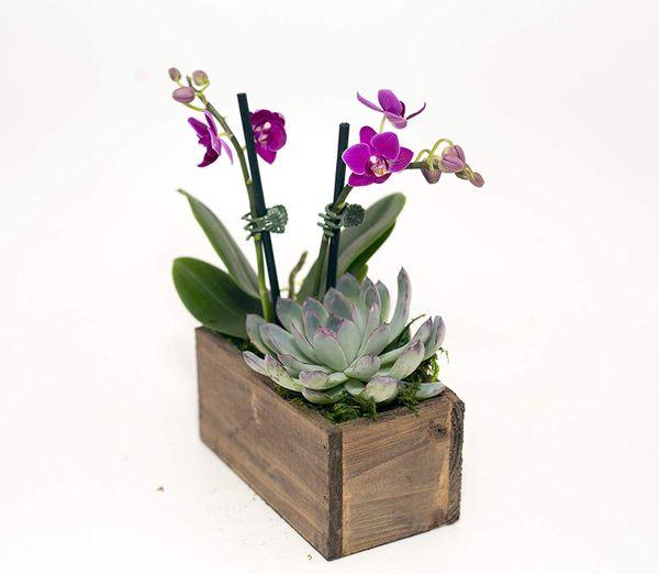 Hallmark Flowers Live Orchid & Succulent Garden