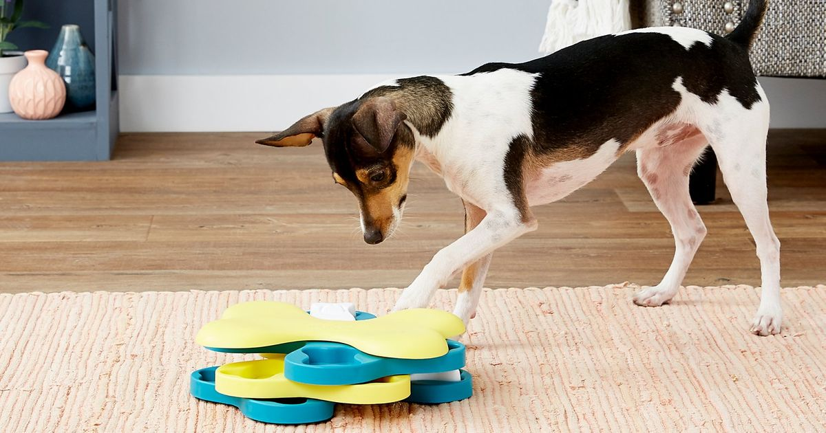The Best Food Puzzles for Cats and Dogs, According to Experts