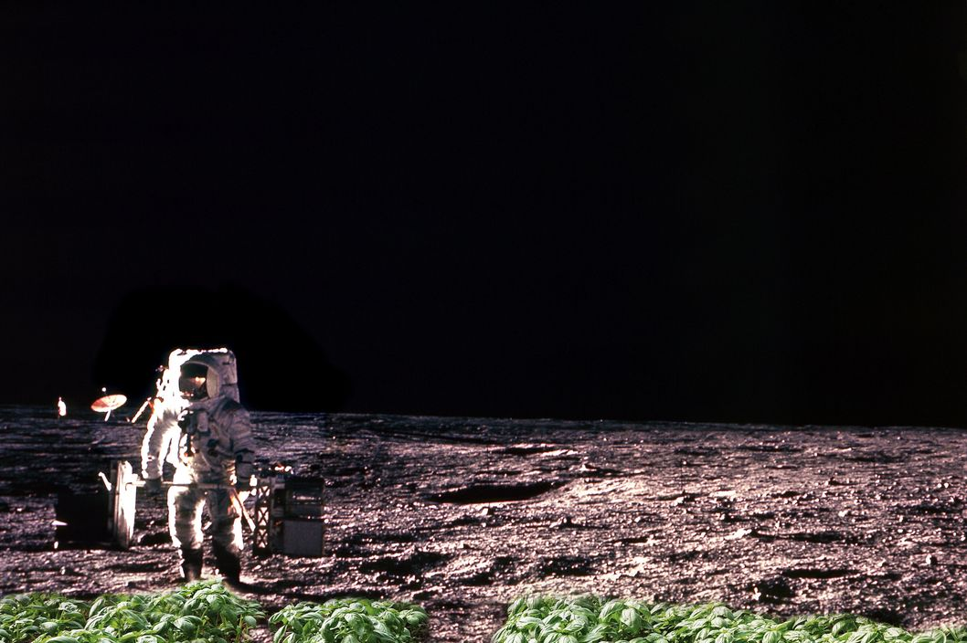 Basil growing on the moon