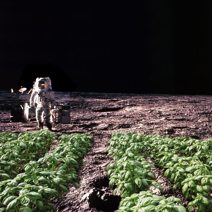 In space, no one can hear vegetarians.
