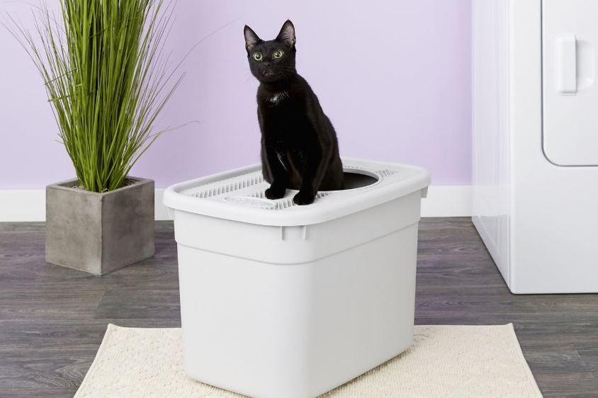 Clevercat Top-Entry Litter Box