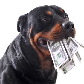 Funny rottweiler holds dollars in mouth, isolated white background