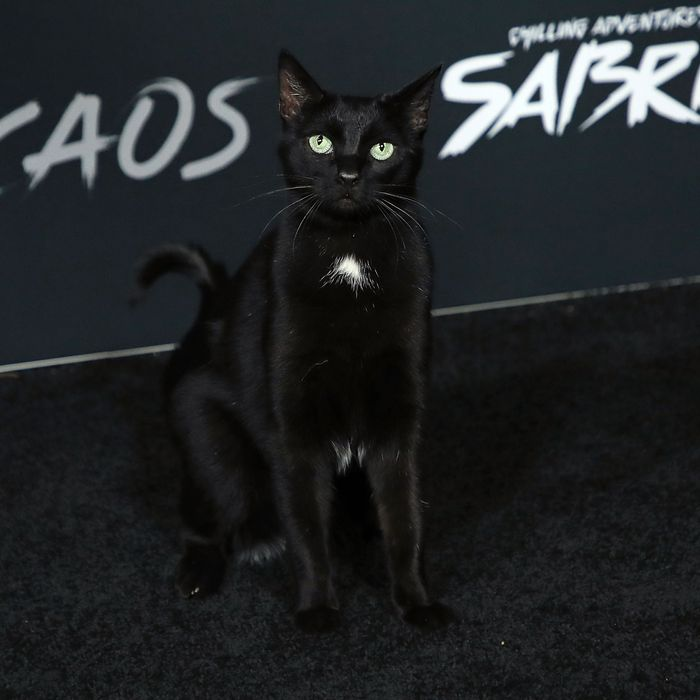 Chilling Adventures Of Sabrina S Cat Salem Walks Red Carpet