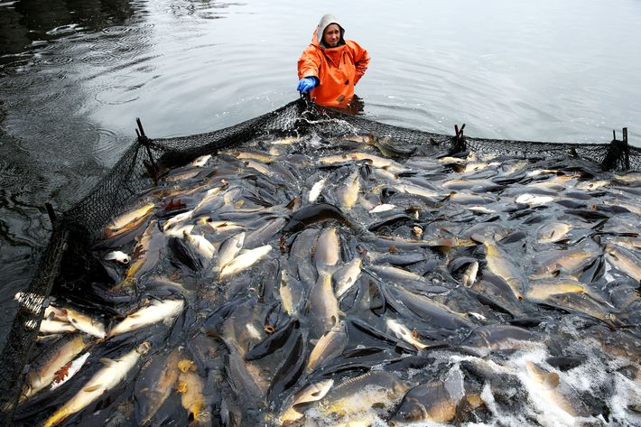 Annually, 32 million tons of fish go unreported.