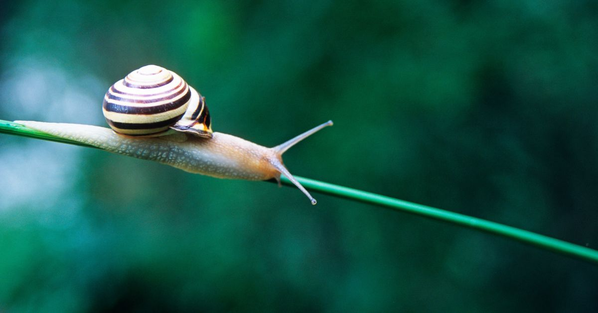 What Does Snail Slime Actually Do for Your Skin?