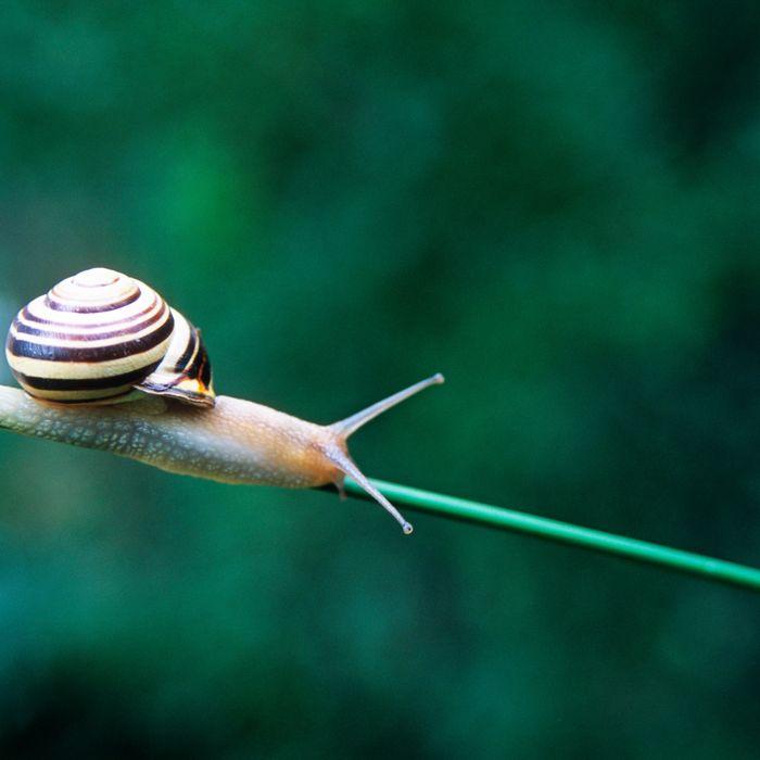 Snail Mucin Skin Benefits 2018
