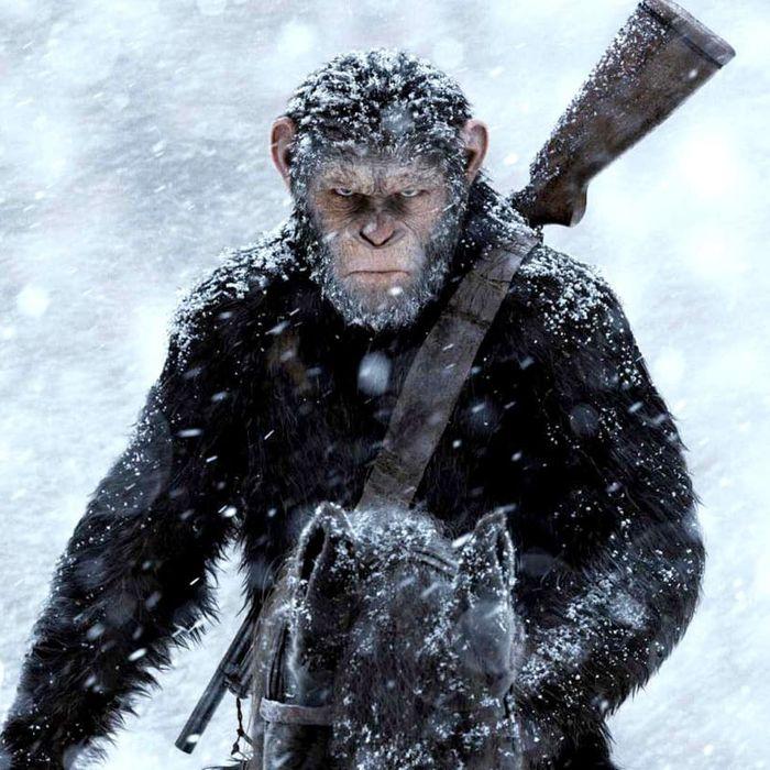 10-apes.w700.h700.jpg