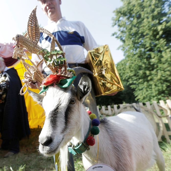 Demyte, Lithuania's Next Top Goat