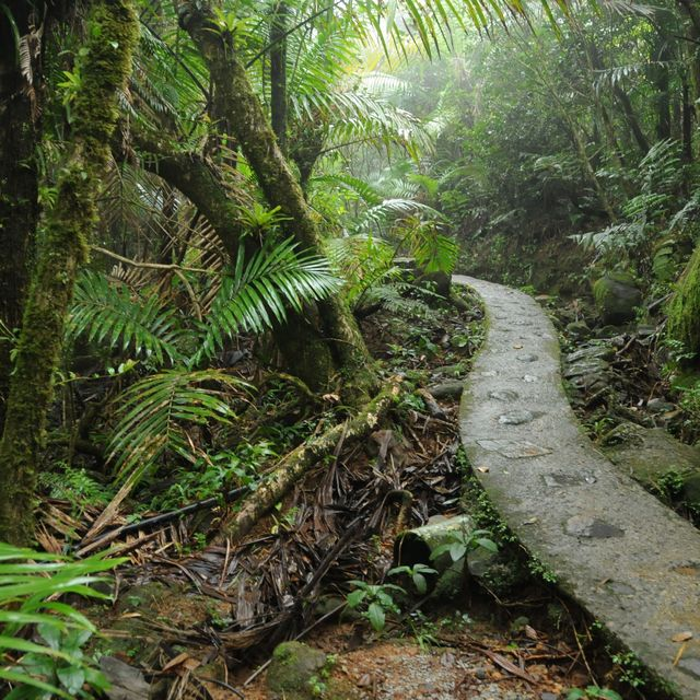 Rainforests and Rum Castles: The Best Day Trips From San Juan