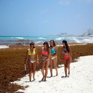 Mexico Caribbean Seaweed Invasion