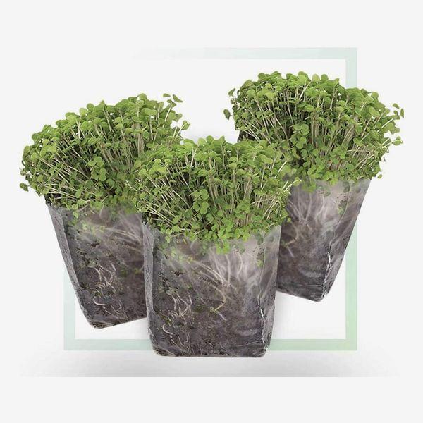 Window Garden Indoor Microgreens Seed Starter Growing Kit