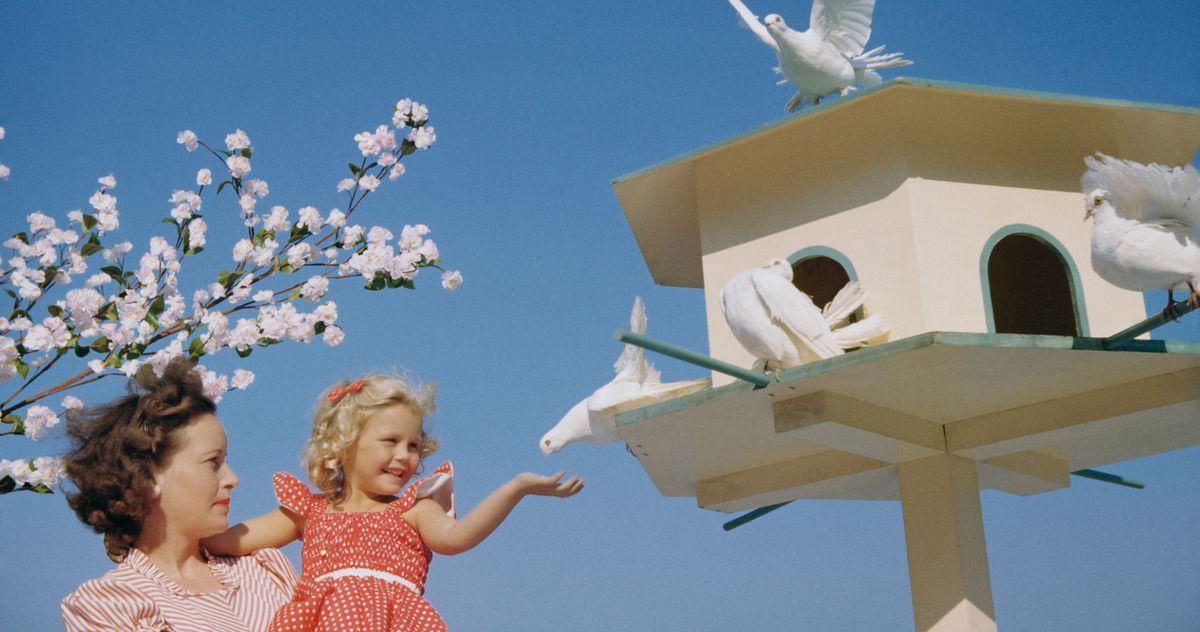 The Best Birdhouses, According to Birders