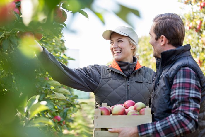 A couple picking apples.