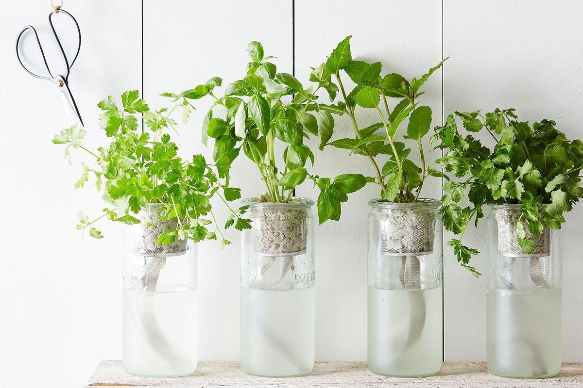 How To Grow An Indoor Herb Garden 2019 The Strategist New York Magazine
