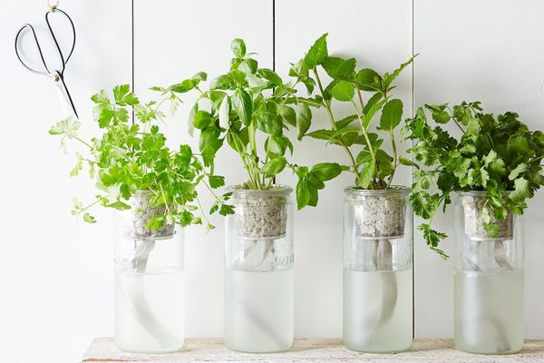 Modern Sprout Eco Planter Herb Kit