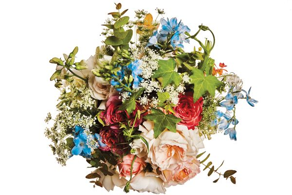 Garden rose, sweet pea, delphinium, rainbow eucalyptus, English ivy, and Queen Anne's lace