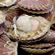 Prized California Restaurant Sued for Serving Lethal 'Undercooked' Scallops