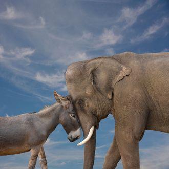Elephant and donkey touching faces together