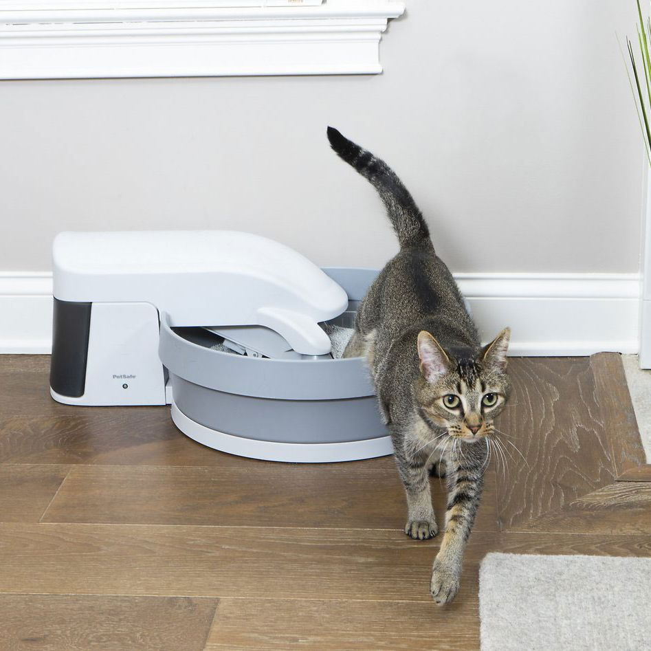 3 Best Self Cleaning Automatic Litter Boxes 2020 The Strategist New York Magazine