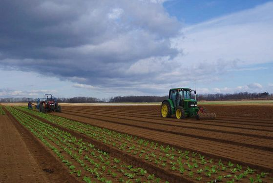 The Cutchogue, Long Island–based farm sells salad greens and vegetables.