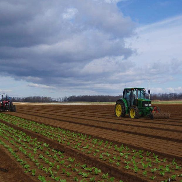 The Cutchogue, Long Island–based farm sells salad greens and vegetables.