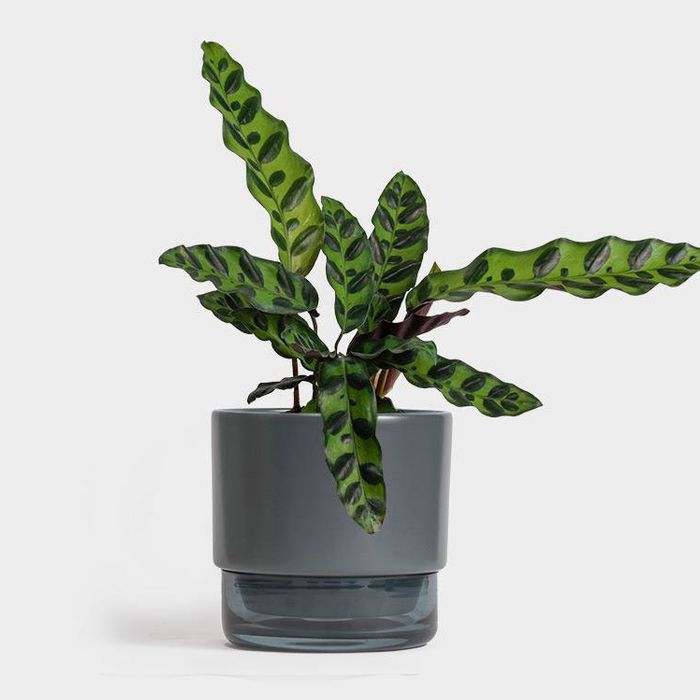 The 12 Best Plants to Give as Gifts 2019  Best Houseplants Html on replanting houseplants, easy houseplants, beautiful houseplants,