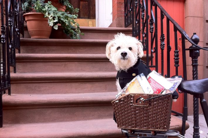 Bocce himself in the basket of the current delivery bike.
