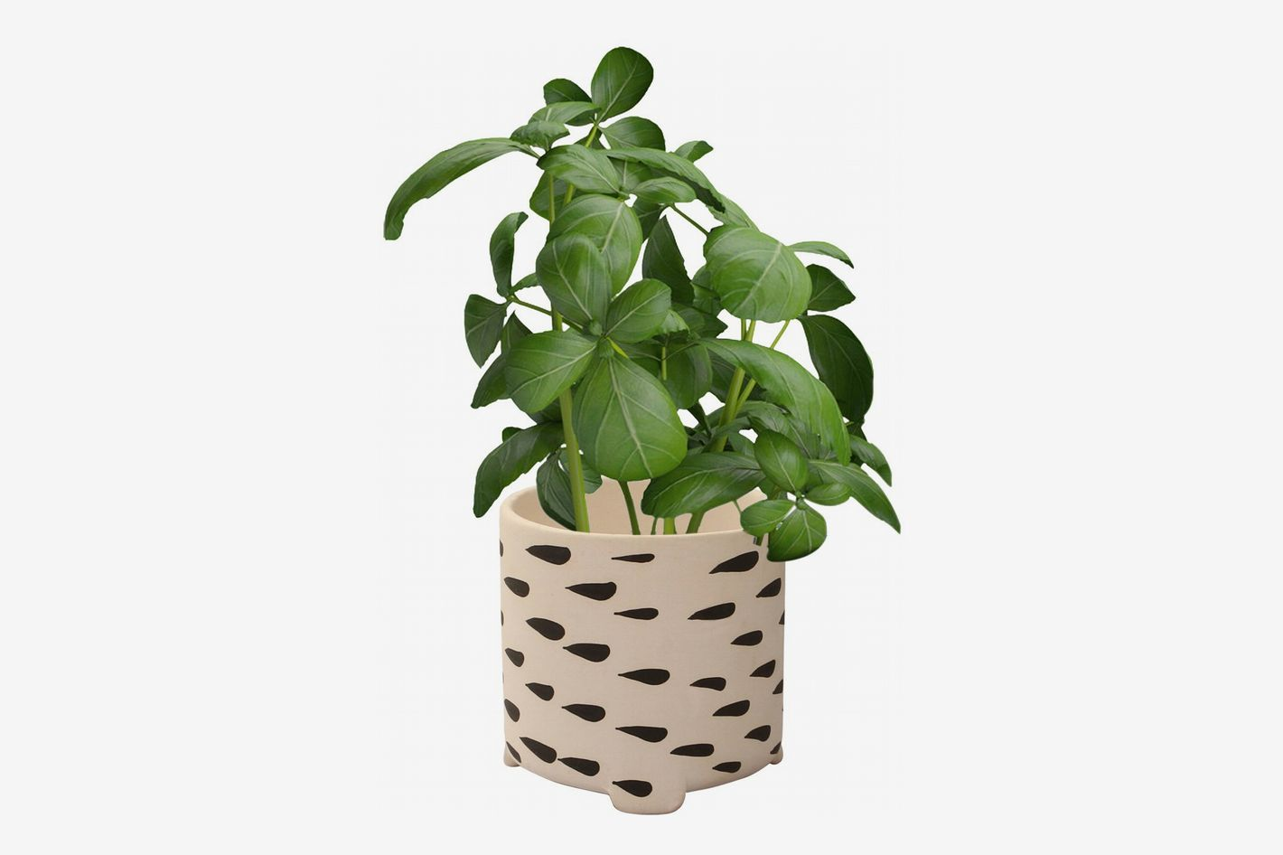 Small Decorative Flower Pot