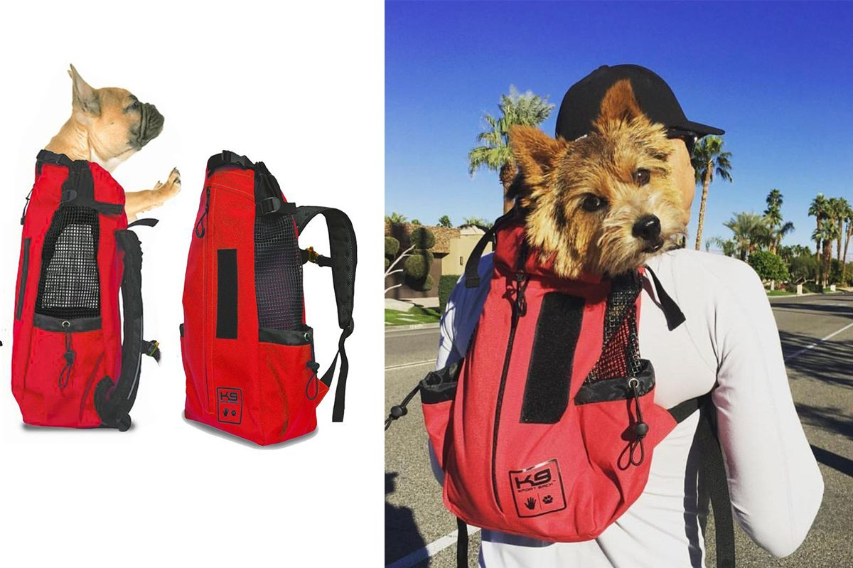 best new toys and gear for pets