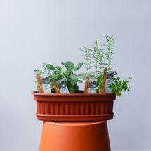 Mixed Herb Window Box