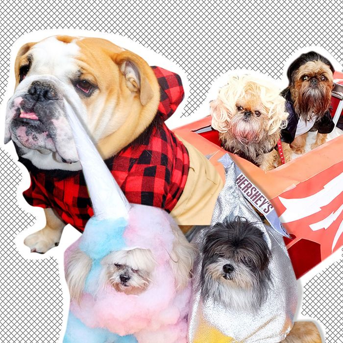 Dogs in costume from 2016's parade.
