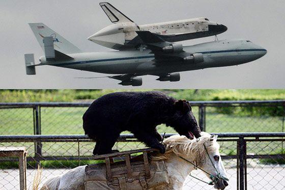space shuttle horses arse - photo #14