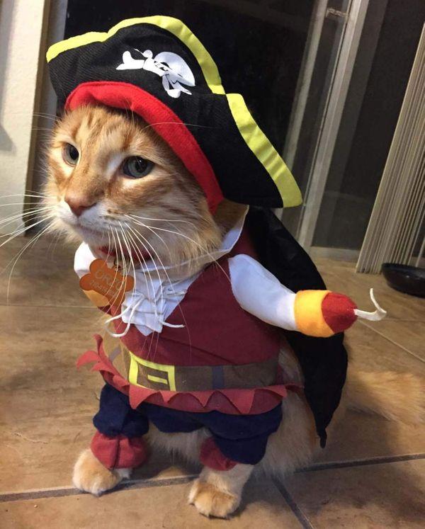 Topsung Cool Caribbean Pirate Pet Disfraz de Halloween