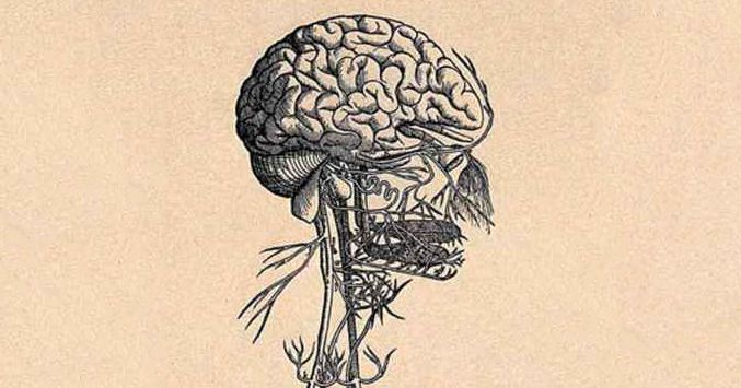 I Now Suspect the Vagus Nerve Is the Key to Well-being