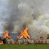 KENYA-IVORY-WILDLIFE-FIRE