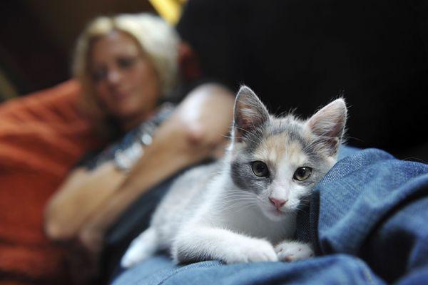 It Happened to Me: I Don't Love My Cat, and It's Making Him Depressed