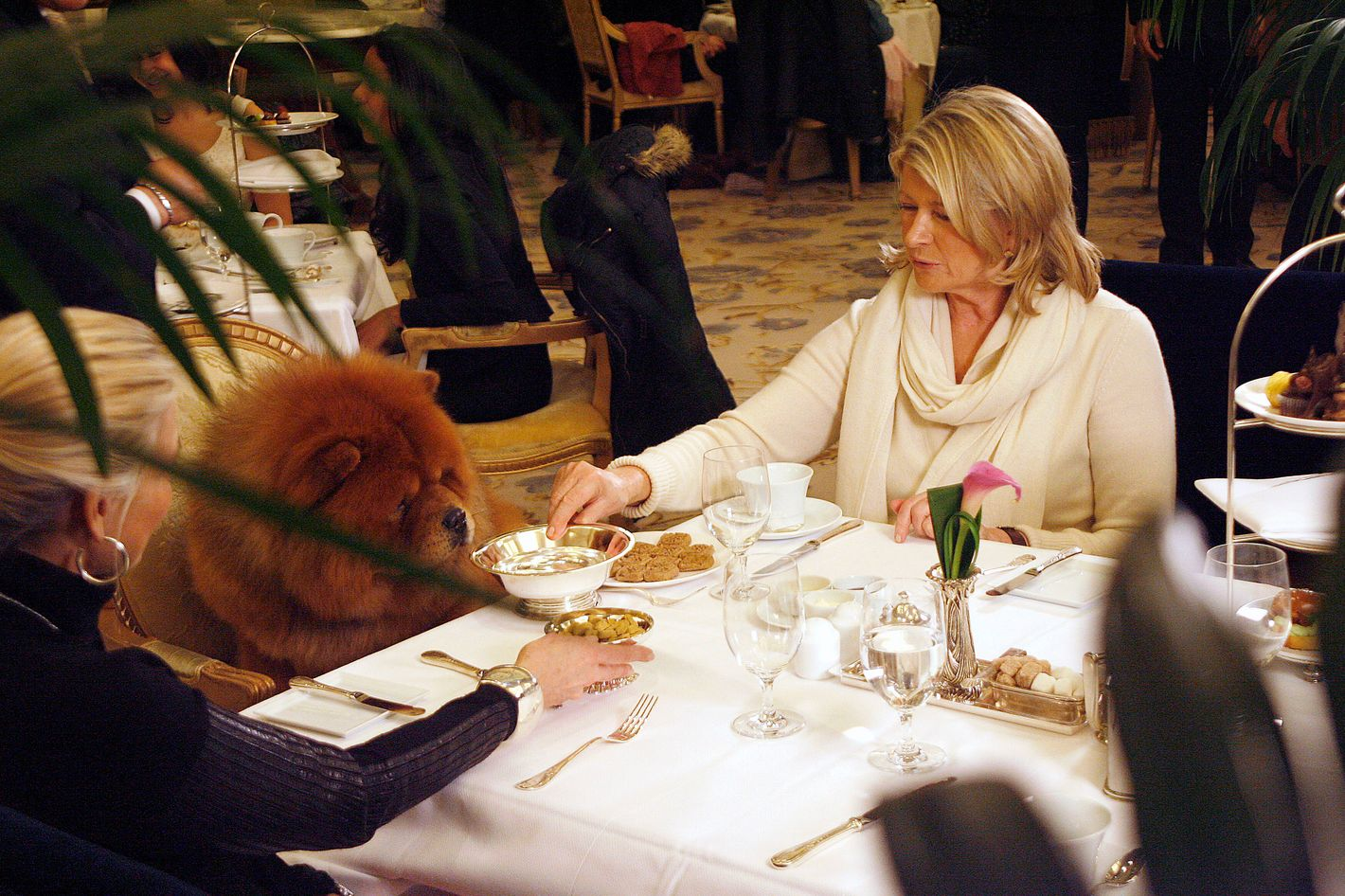Martha Stewart==Martha Stewart Having Lunch with her dog at the Plaza==The Plaza, NYC==February 12, 2012==?PatrickMcmullan.com==photo-Sylvain Gaboury/PatrickMcmullan.com====