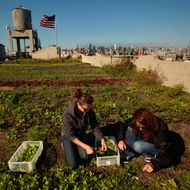 A New Study Comes Down Hard on the Actual Benefits of Urban Farming