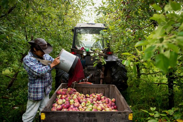 Governor Cuomo Sets Aside More Than $50,000 of State Money to Improve New York's Hard Cider