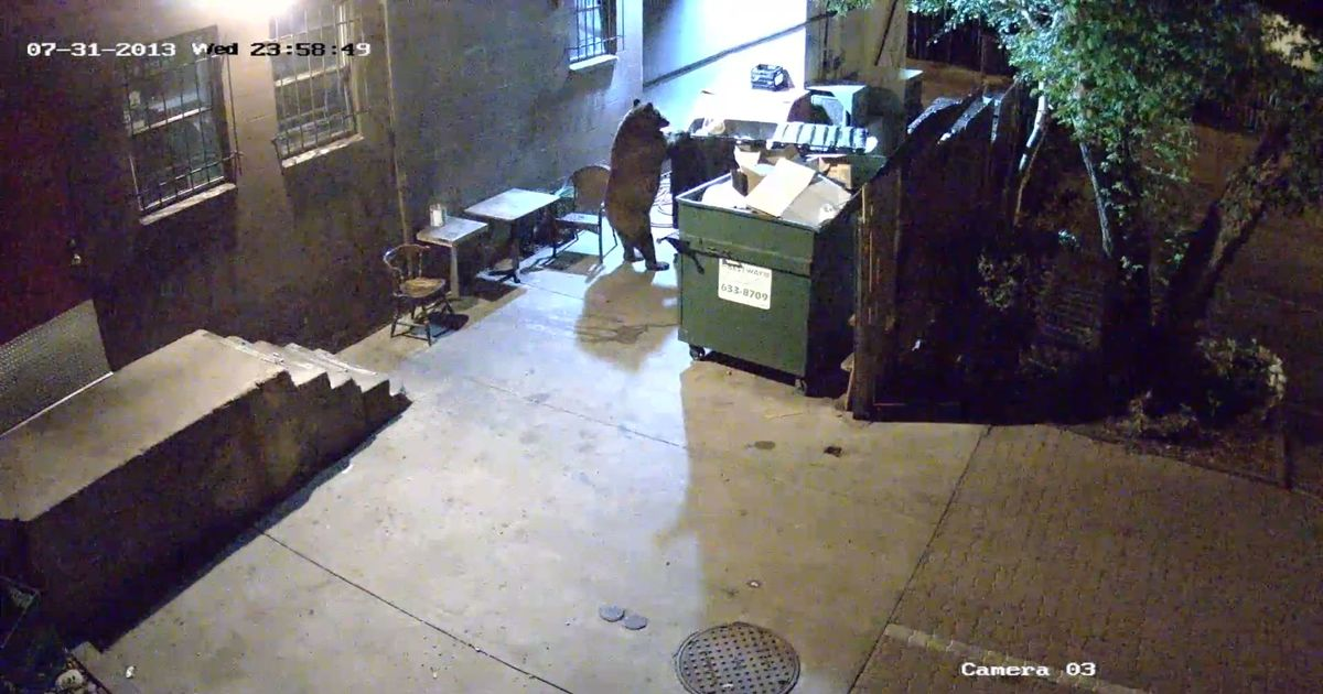 Watch This Bear Steal an Entire Dumpster From a Colorado Springs Restaurant