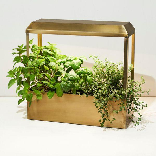19 Best Indoor Garden Kits 2021 The, Modern Sprout Indoor Herb Garden Kit