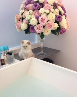 Choupette, courtesy of V magazine's Twitter feed.