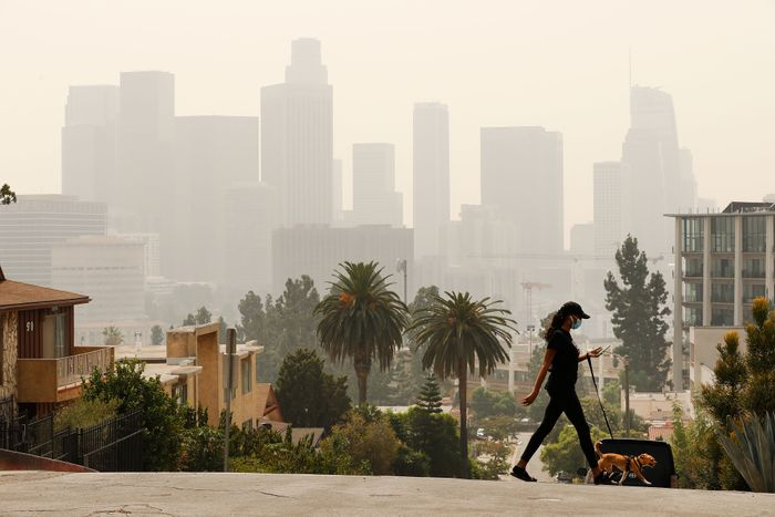 A woman checks her phone and walks her dog as smoke and ash from the Bobcat fire burning in the Angeles National Forest have blanketed the region for a week, contributing to poor air quality which nearly obscures the tall buildings of downtown Los Angeles.