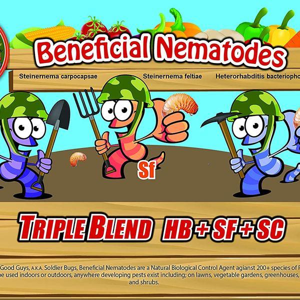 NaturesGoodGuys Live Beneficial Nematodes